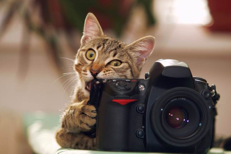 Cat playfully bites a photo camera