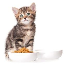 6 reasons why dry food is not good for your cat