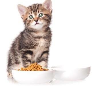 Cat Dry Food Ten Reasons