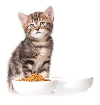 Dry cat food in a bowl for a kitten