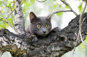 Scared cat in tree