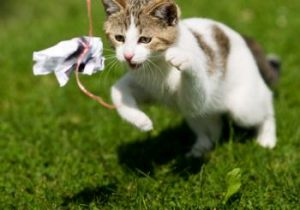 cat trying to catch a toy on a string