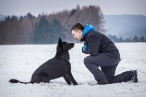 If your cat is afraid of your dog, a big part of the process is to train your dog. More information here.