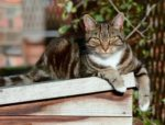 How to avoid hyperthyroidism in cats
