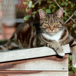 male cat lying on top of dog house