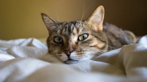 My cat wakes me up at night