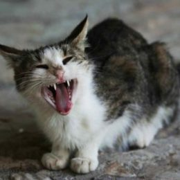 deceased weight is among most coomon signs of hyperthyroidism in cats