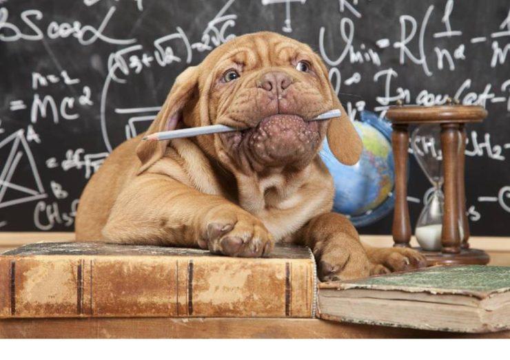 dog chews a pencil