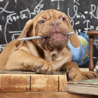 Top causes of excessive chewing in dogs