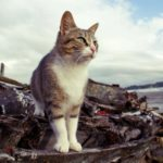 A territorial outdoor cat