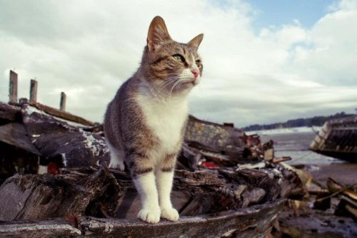 A territorial outdoor cat