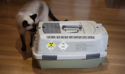 Cat investigating pet carrier