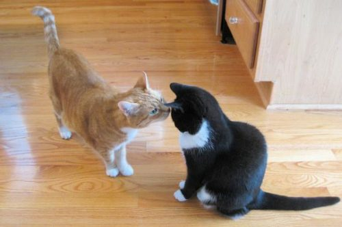 Two cats greeting each other.