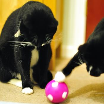 Two cats playing with a treat ball