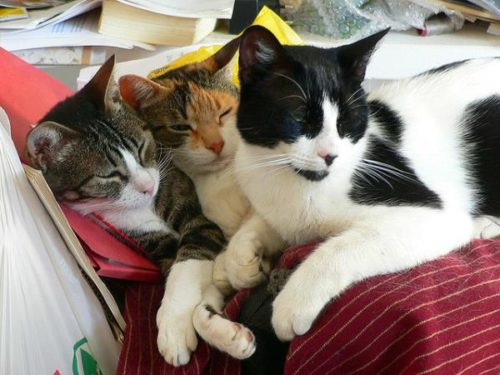 Three cats relaxing