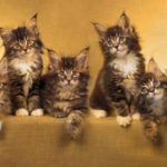 Our top 10 most popular cat articles of year 2014