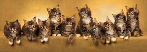 10 cats on a golden background