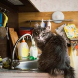 Forest cat on a kitchen counter besides sink