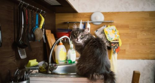 Keep Cats Off Patio Furniture.How To Easily Keep Your Cats Off Kitchen Counters