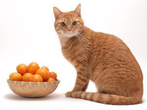 Orange cat with oranges