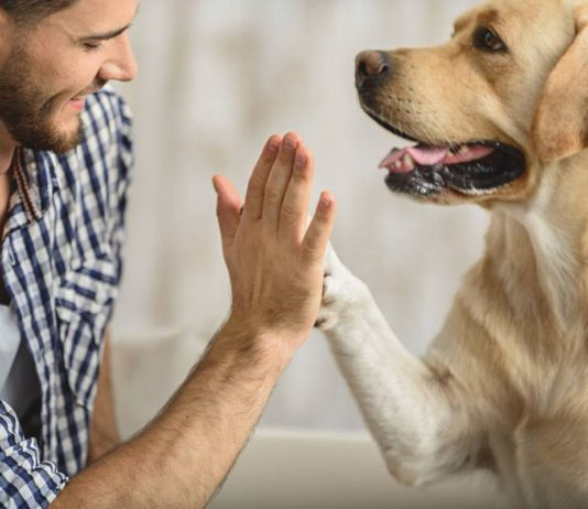 man gives dog a high five to calm her