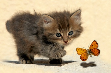 Cat chasing a butterfly