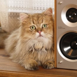 cat listening to audio speakers