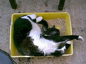Cat napping in a clean litter box.
