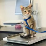 What to do when a cat is losing weight