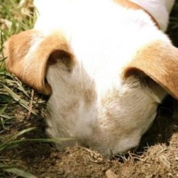 How to keep your dog from digging holes in the garden