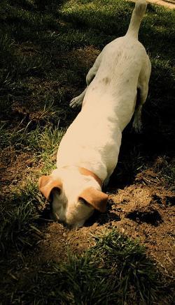 Do digging in garden