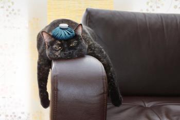 A black cat in stress