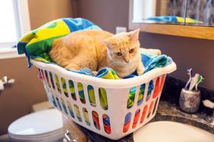 cat sleeping on a laundry
