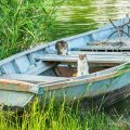 Two cats in a fishing boat on the river