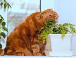 How to keep cats from eating house plants