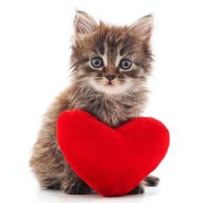 Male kitten in heat with red heart