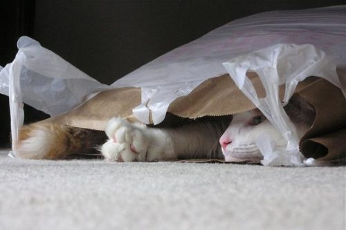 Summer the cat hiding in a plastic bag
