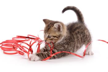 Kitten playing with a gift ribbon