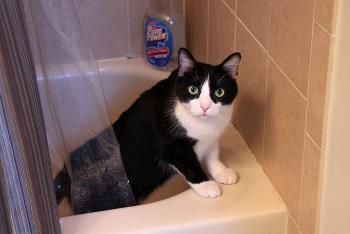 Cat taking a shower in a bath.