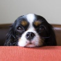 What to do if your dog is hungry all the time