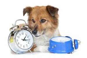 Dog by the clock waiting for meal