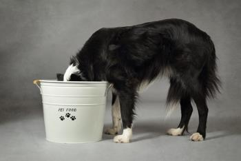 Dog eating dry food from a bucket