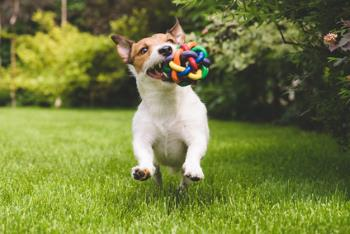 dog playing with a rubbery ball