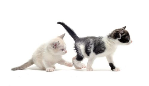 a male and a female kitten