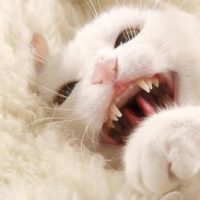 Signs of cat aggression, irritation and arousal