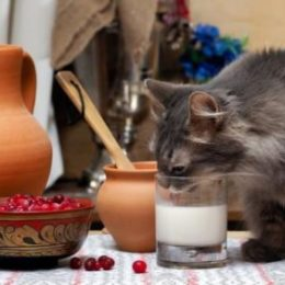 A cat drinking milk from a glass on table