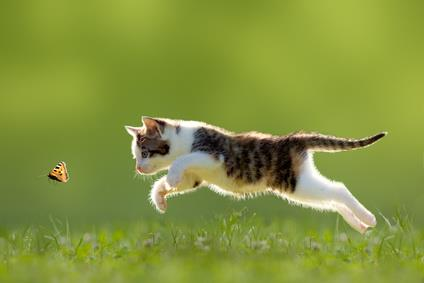 Cute kitten trying to catch a butterfly