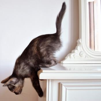 Kleo the cat jumping off chimney ledge