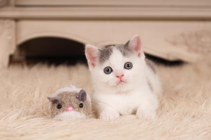 Kitten with a toy mouse