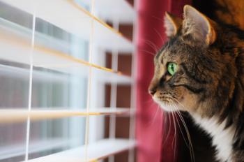 Cat glaring through a window
